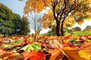 November in Evansville